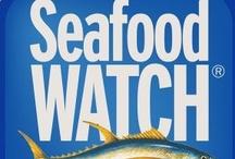 Sustainable Seafood / Sustainable seafood recipes, news, apps ...  #recipes #sustainable #seafood #apps / by Carolyn Sorensen