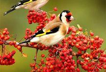 Birds / by Jocelyn Beatty