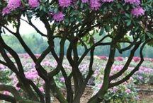 garden / by Deborah Schultz