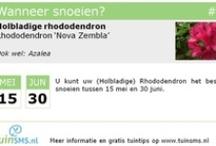 Tuintips / De beste tuintips van tuinsms in een eenvoudig te pinnen layout! / by tuinsms.nl