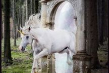 Unicorns / by House of Root