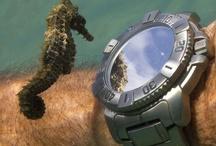 random animal stuff / I'm an RVT... gotta have animals! / by Linda Graham RVT