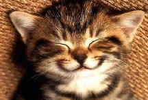 Cats / I love cats! How about you? / by Social Abundance Marketing