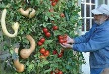 Gardening Techniques / by Deborah Ryder
