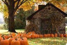 Fall / Halloween / by Jaline Eguillos-Johnson Lyons
