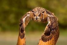 Birds / by Pam Matthews