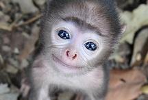 adorable / by Stephanie Dillard