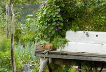 Garden / by Sharon L.
