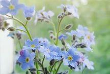 ༺♥༻ Fleurs & co ༺♥༻ / by Ketty Mint