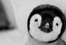 Cuteness / by Krista Betts