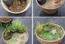 Outdoor/Gardening / by Free Stuff Finder