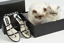 Cats and Flats / The best spring sandals paired with the cutest cats around.  / by Vogue Magazine
