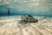 Aquatic Animals / by Bernard Ryefield