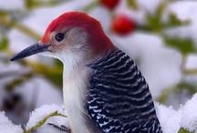Birds at our Window Feeder/Yard / by Sarah Beitler