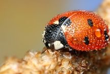 Bugs: Good, Bad and Ugly / by Ron Wolford