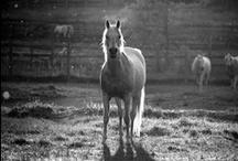 Horses / by Paula O'Hara