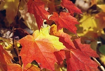 The Miracle of Fall / Everything you need to know about the fall season from the University of Illinois Extension  / by Ron Wolford