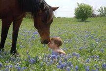 Texas / by Linda Abraham