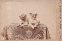 Vintage DOG photos -1 / I love to collect old dog photos and RPPC.....I love the stories they tell...and the fact someone loved them enough to photograph them / by Denise Thompson