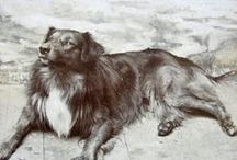 Vintage Dog Photos 3 / by Denise Thompson