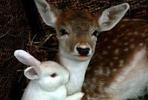 {Animal Cuteness} / I adore animals. / by Shandy Burton ♞ Morgan de Grey