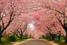{Spring Loveliness} / by Shandy Burton ♞ Morgan de Grey