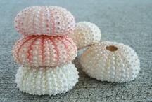coral & shells / by Brittany Barnard