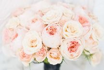 Wedding Ideas / by Alexis Young
