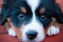 Cute Animals & Pet Accessories / by Laurel White