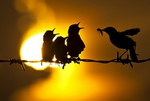 Birds / by Debi Chapman
