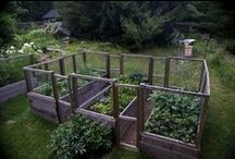 Gardening / by Tracie Craft