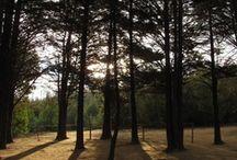 Breathe Trees / http://www.youtube.com/watch?v=_fq3fshFWGc :) / by Daniela Cruz