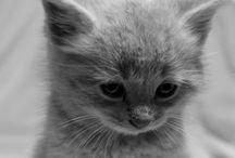 kitty kat / by Torie Jokinen