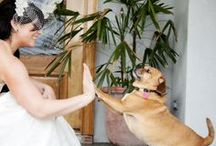 Pets in Weddings / by BridalGuide
