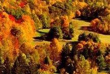 Seasons / by Zoë Dawes