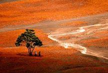 Beautiful Nature / by Firdaus Webgrrl