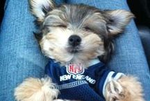 Football Fuzzies / Because we love photos of dogs (and cats!) wearing football jerseys! / by USA Football
