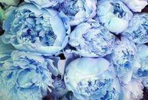 Something (Beautifully) Blue / by Four Seasons Bridal
