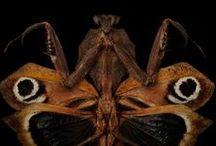 bugs / by hypnothalamus