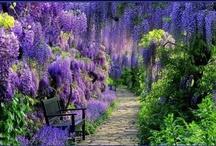 Gorgeous Gardens  / by Shannon Alongi