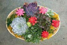 In House Garden Design / Terrariums, succulent dish gardens, foliage planters and orchid gardens. / by Flora Unique Florist