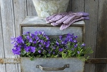 GARDEN: Planters and Flower Pots / by Lorrie Brewer