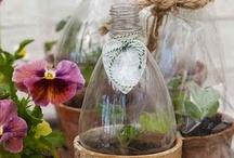 Gardening / by Gina Bacani