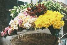 Flowers / by Carolina Dieguez