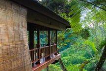 Tropical Living / My beloved refuge / by Debbie R.