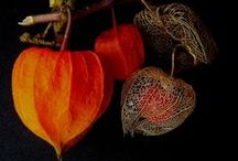 Autumn / I love all the obvious images of Autumn...but I wanted this board to represent the non-obvious images that make me feel the same lovely melancholy I have for Autumn..... / by Linda Bailey Zimmerman