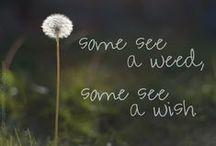 Someone once said / by Randa Boggs