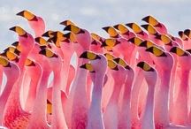 Birds / by Becky O'Day