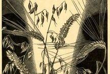 botanical  / by Pamela Farmer