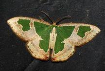 butterflies and moths / by Pamela Farmer